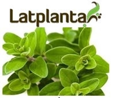 Picture of SPILVA Latplanta - Marjoram 5g (in box 30)