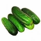 Picture of Fresh Cucumber LAUKU (LV) BOX*12KG £/kg