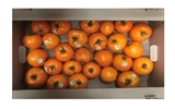 Picture of Tomatoes Yellow , 8kg